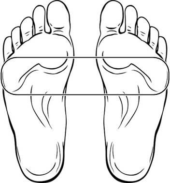 中足部の図